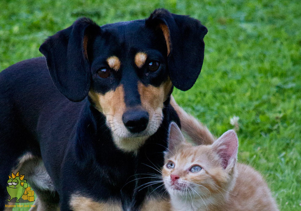 Cat and a dog